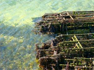 Photo du Mois 2012 05 eau 010