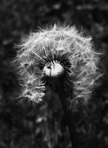Photo du Mois 2014 03 noir et blanc 017