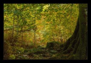 Photo du Mois 2014 10 automne 001