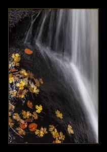 Photo du Mois 2014 10 automne 002