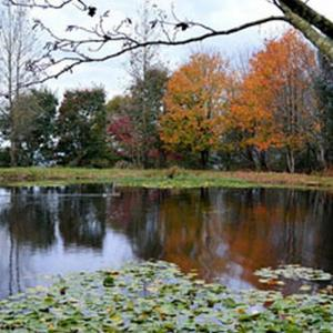 Photo du Mois 2014 10 automne 004