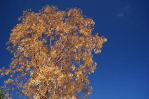 Photo du Mois 2014 10 automne 018