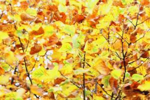 Photo du Mois 2014 10 automne 023