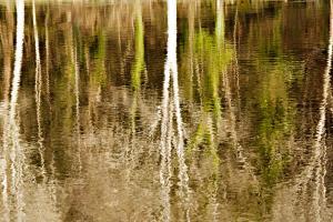 Photo du Mois 2013 06 reflets 020