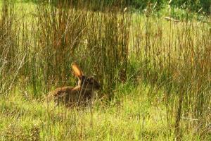 Photo du Mois 2015 08 animal 014