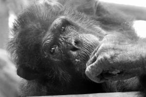 Photo du Mois 2015 08 animal 022